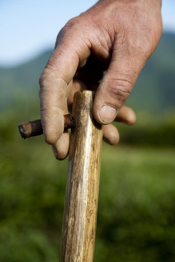 la mano di chi lavora l'aglio di Vessalico