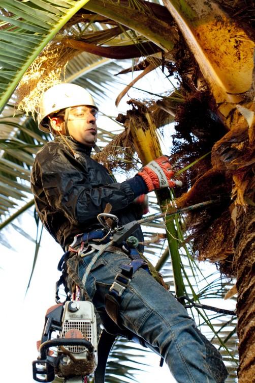 Risanamento palma e osservazione delle foglie
