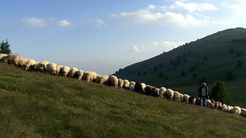 Gregge e pastore