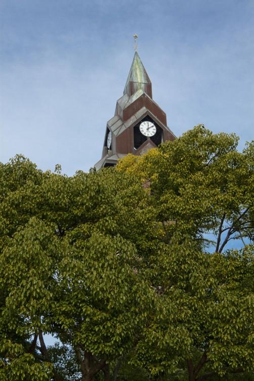 Albero della canfora e campanile - Andora
