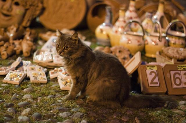 Dolceacqua - Gatto e cocci