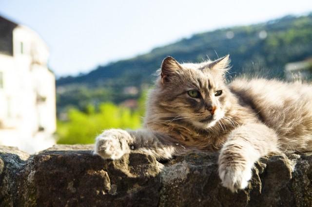 Dolceacqua - Gatto Remì
