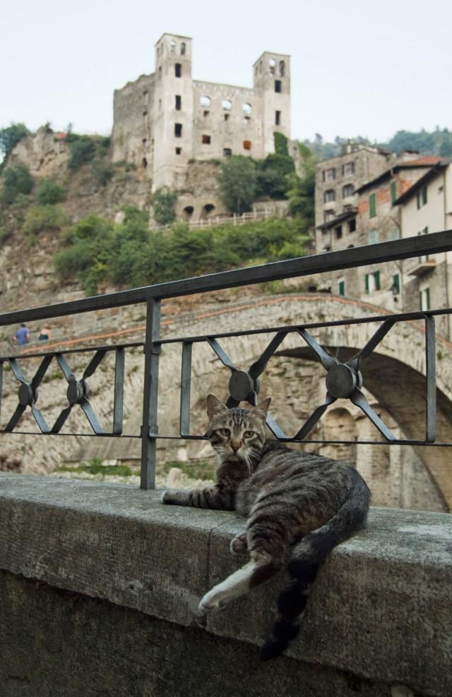 Dolceacqua - Gatto e castello