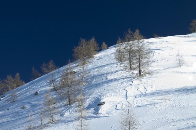 Monesi e neve - Alberi
