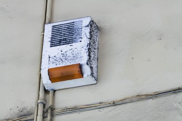I ragni dei portici di Oneglia - Imperia - allarme con nidi