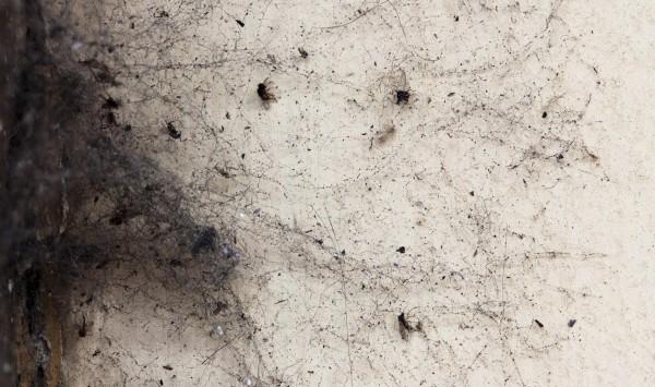 I ragni dei portici di Oneglia - Imperia- moscerini