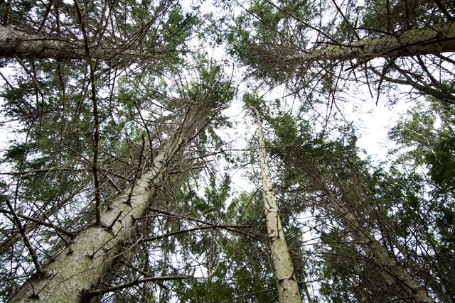 Fronde e alberi - Bosco