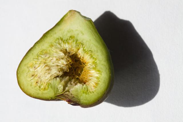 Infiorescenza di Ficus carica