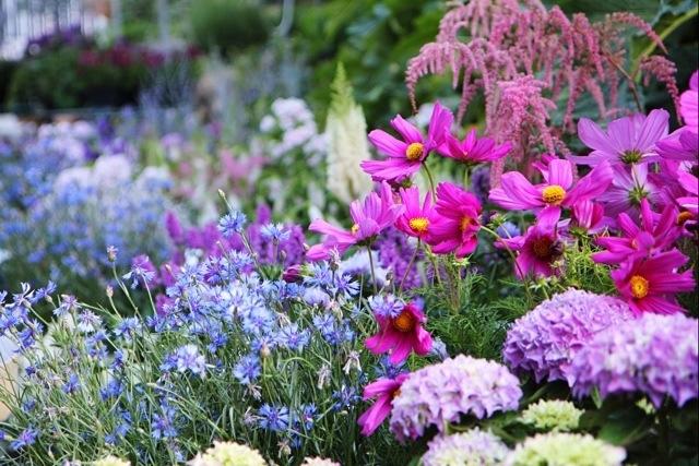 fiori alla Festa delle Erbe di Rollo