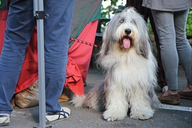 un tipo simpatico, cane, alla Festa delle Erbe di Rollo
