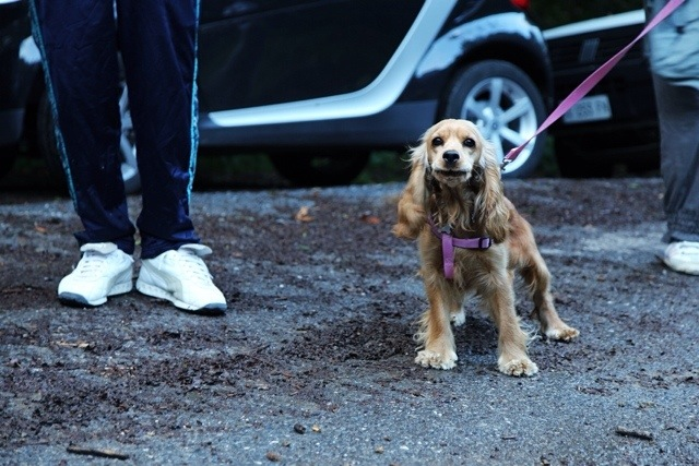 trekking col cane in Liguria