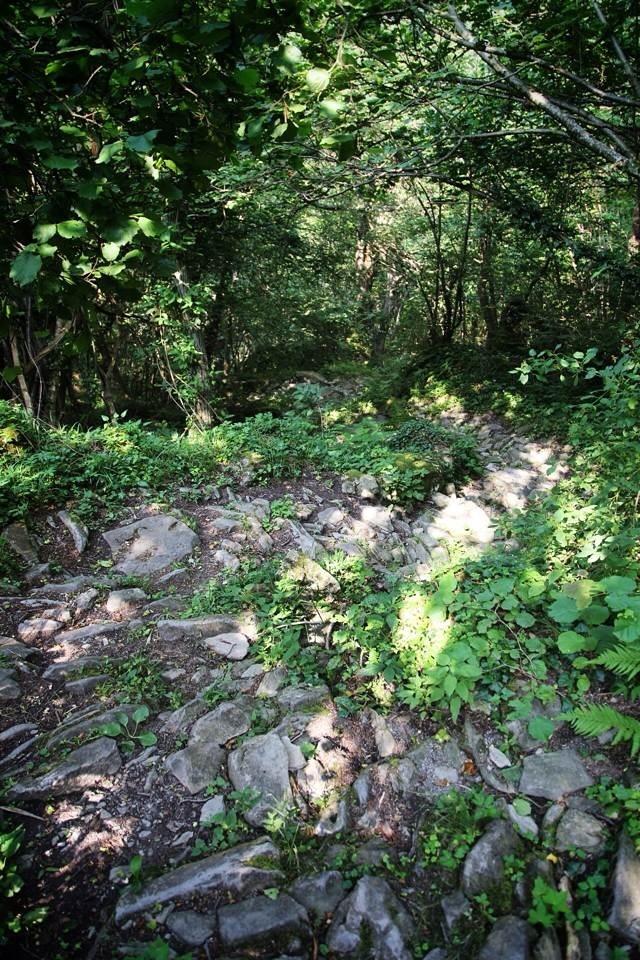 mulattiera nel bosco sopra a Mendatica, il vero ubagu